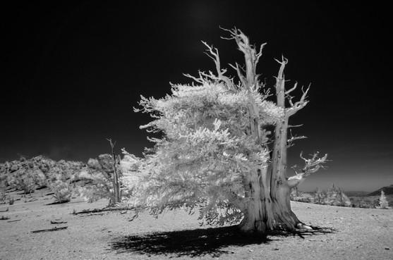 Infrared7.jpg