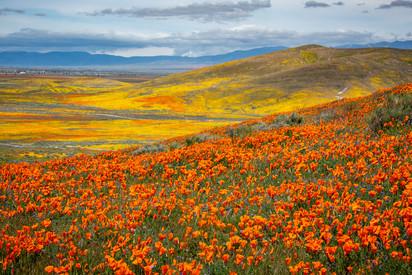 Antelope Valley 7.jpg