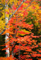 Vermont in Fall13.jpg