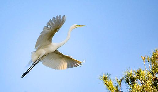 Birds 10.jpg