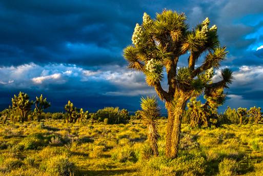 California Desert 3