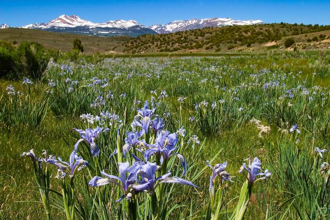 Eastern Sierra 1.jpg