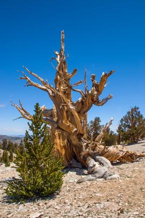Eastern Sierra 2.jpg