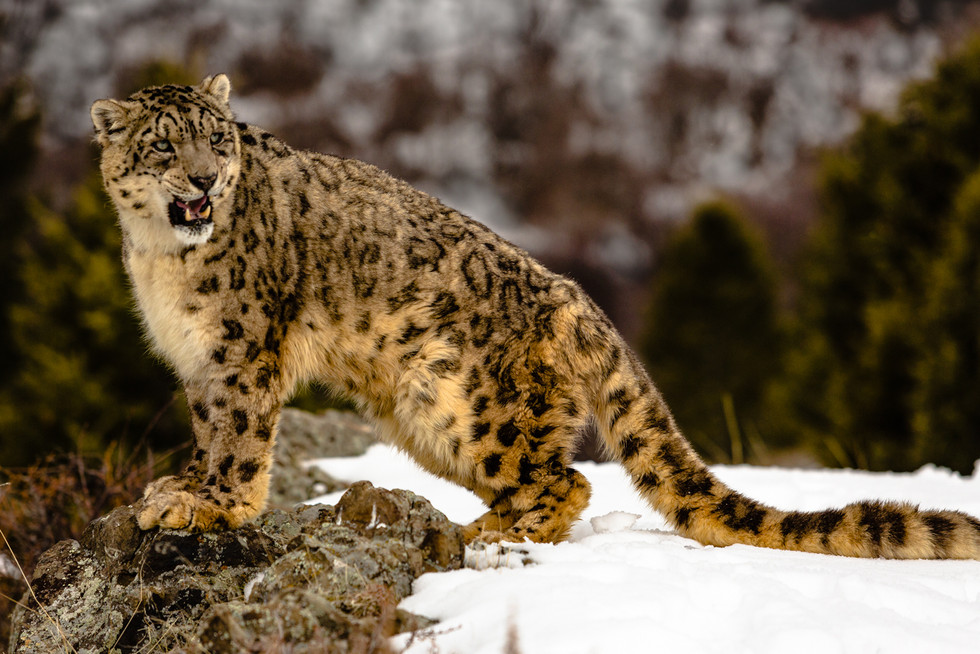 Wild Animals in Winter22.jpg