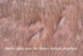 Hautpilz 2.jpg