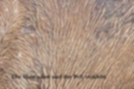 Hautpilz 3.jpg