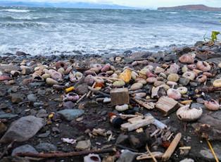 Greenpeace отправит на экспертизу погибших морских животных Камчатки