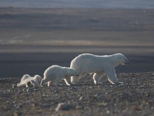 Туристическое лето в «Русской Арктике»: хорошая погода, прорыв в логистике и много белых медведей