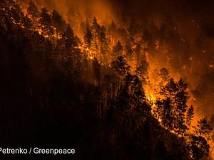 Фотограф Greenpeace фиксирует лесные пожары в Сибири