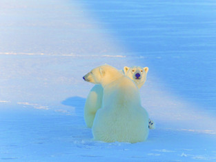 Арктическая экспедиция «Через Полюс холода» установила мировой рекорд