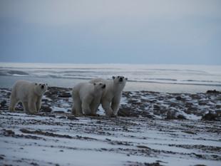 В национальном парке «Русская Арктика» проведут масштабные работы по гранту Ростуризма