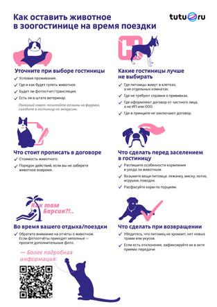 Что нужно знать про гостиницы для животных и их перевозку: Туту.ру составил специальные памятки