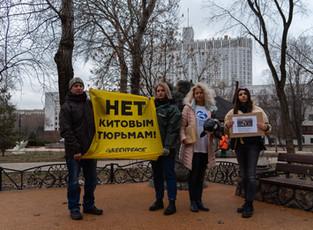 Представители Greenpeace и коалиции «За свободу косаток и белух» требуют запретить вылов китов