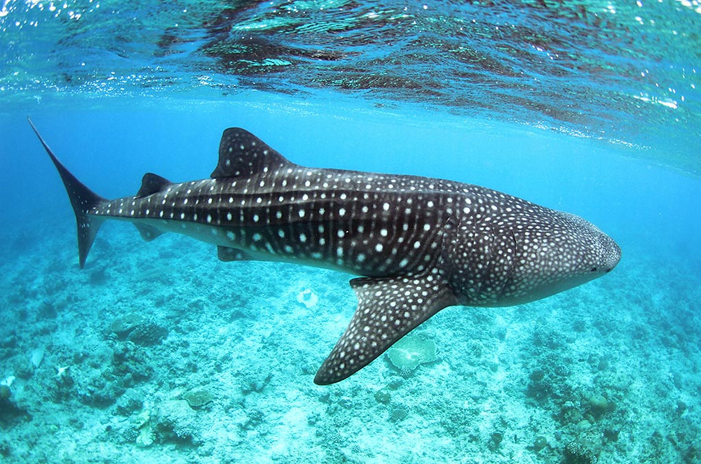 www.turpressa.com  LUX* South Ari Atoll, Maldives