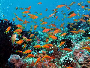 Подарок океана в Dhigali Maldives