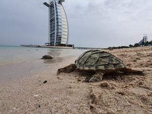 Первая очная конференция UFI состоялась в Дубае после пандемии