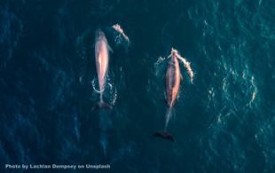 В национальном морском парке Ангтхонг были замечены киты Бруда