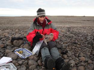В «Русской Арктике» открыт сезон полевых научных экспедиций