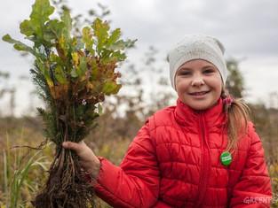 Гринпис России устраивает большие посадки деревьев в Подмосковье
