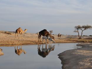 Манит ли туристов Африка: что со спросом и ценами на билеты в Египет и Танзанию?