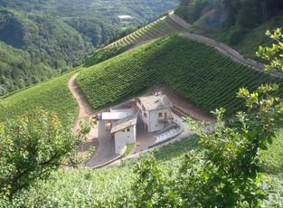 Трентино: гостиничный номер с видом на виноградник