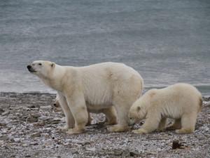 В «Русской Арктике» подвели итоги 2020-го года