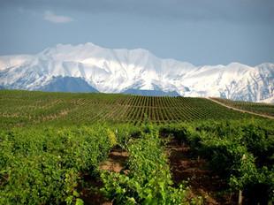 In vino veritas: единый винный маршрут по Кавказу