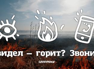 Гринпис и Bookmate запустили кампанию против поджогов «Увидел — позвони!»