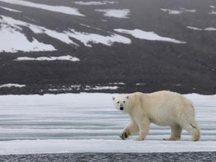 В «Русской Арктике» апробируют новые возможности проведения экомониторинга