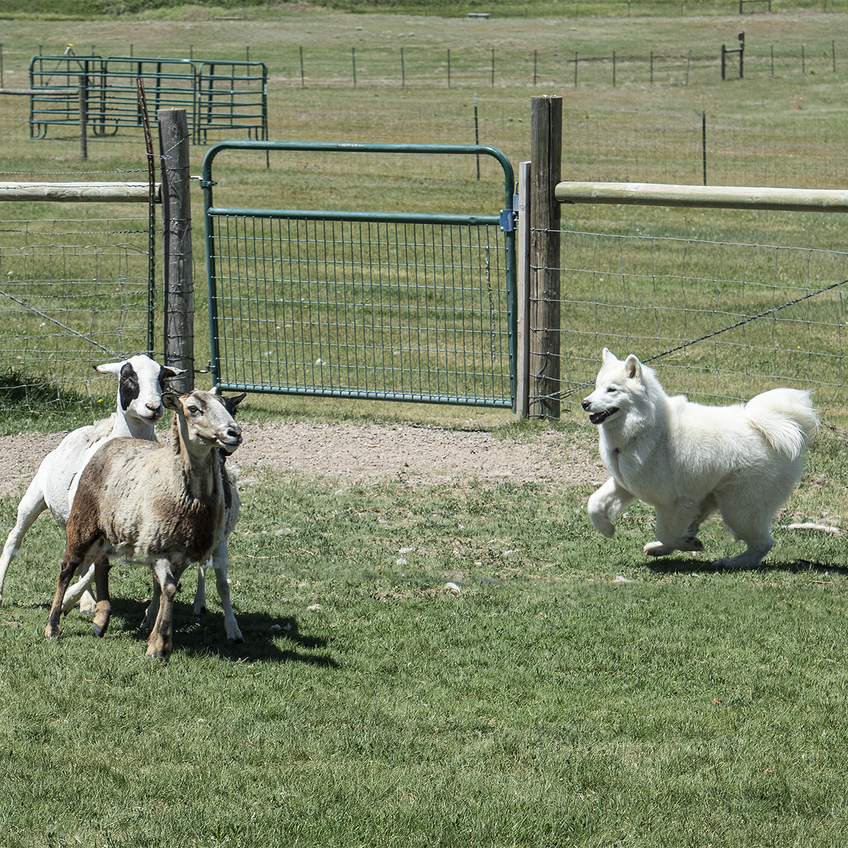 _DSC1704_brook-herd-square