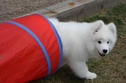 Halo trick dog2