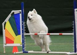 agility-TW-jump