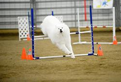 agility-TW-jump2