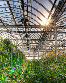 Lufa_Farms_Montreal_rooftop_greenhouse.j