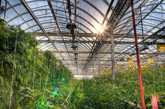Lufa_Farms_Montreal_rooftop_greenhouse.j