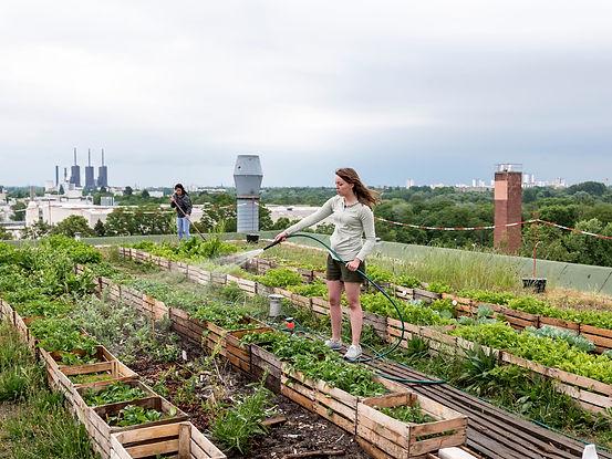 urban_farming.jpg