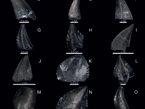 Microvertebrates from Krasiejów