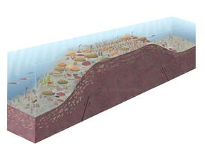 Devonian sea (Poland)