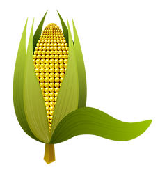 corn-1992041_1920.png