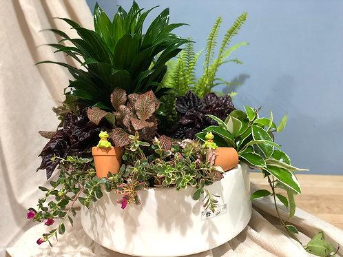 桌上型組合盆栽003
