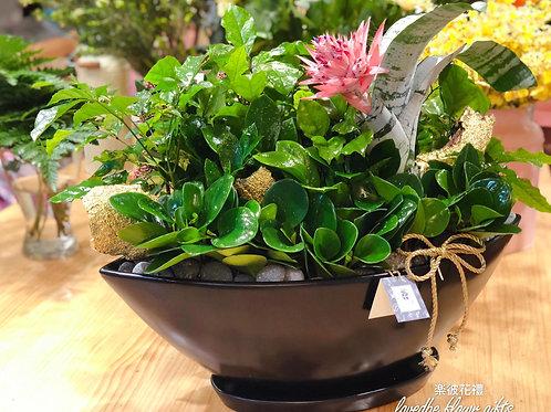 桌上款船型組合植栽027