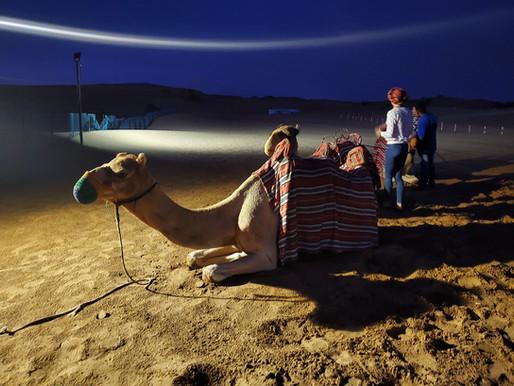 Trip Report: Planet Travel Desert Safari