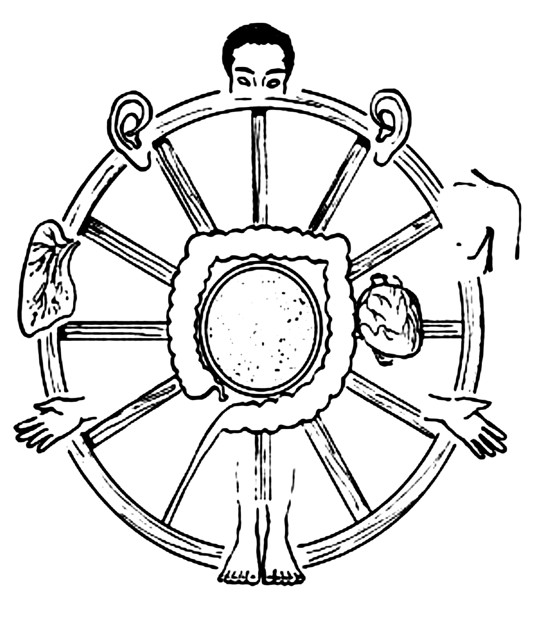 Iridology Wheel of the Eye