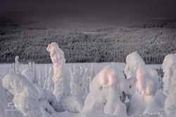 Laponie-4426