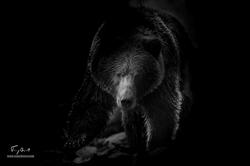 Alaska-5583