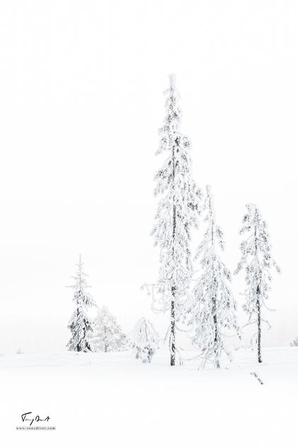 Laponie-4123.png