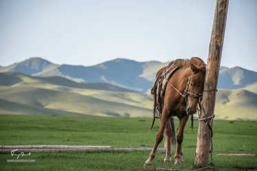 Mongolie-0080.png