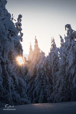 Laponie-3211