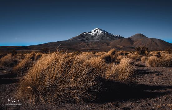 Chili-4206.png