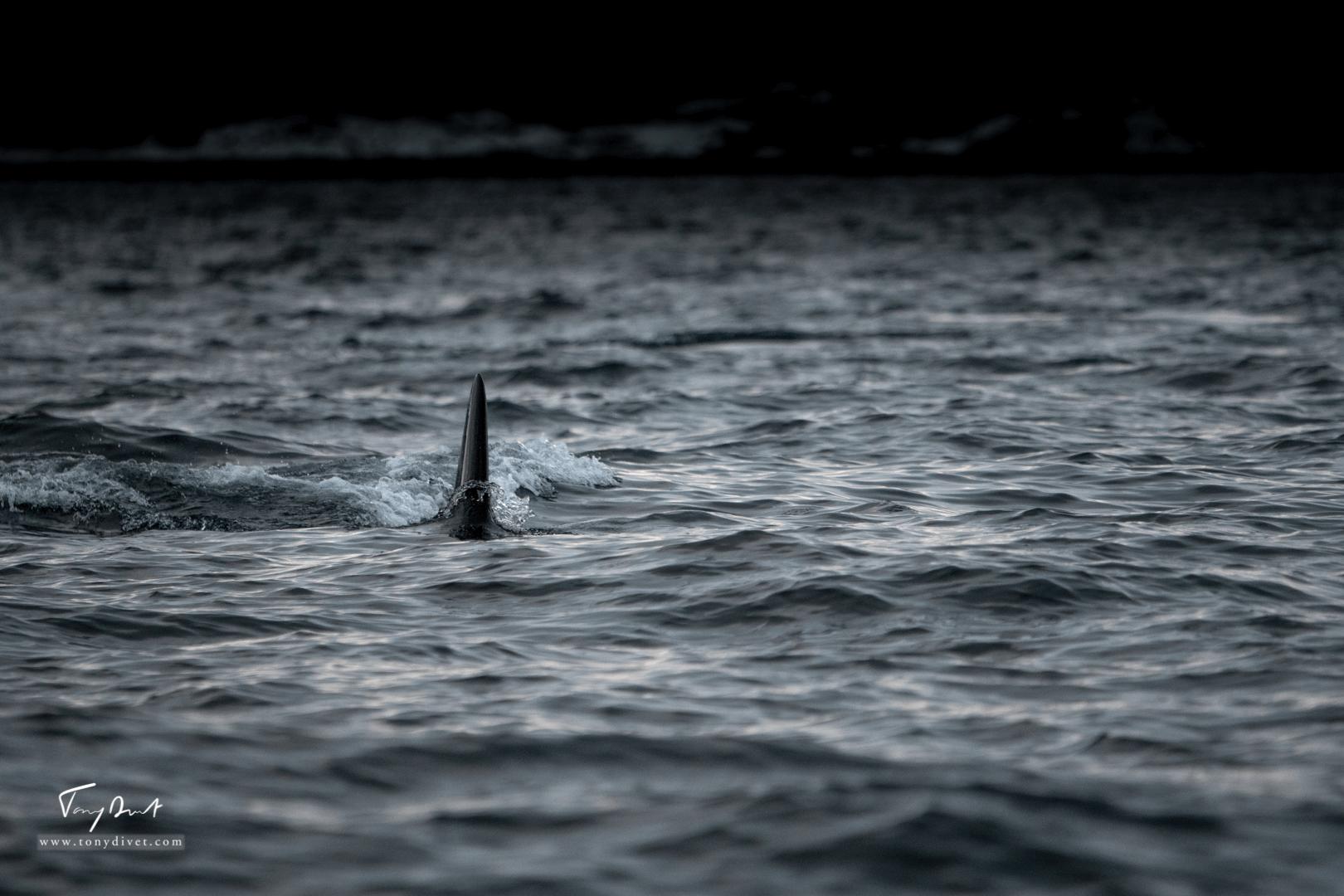 Orca-9125
